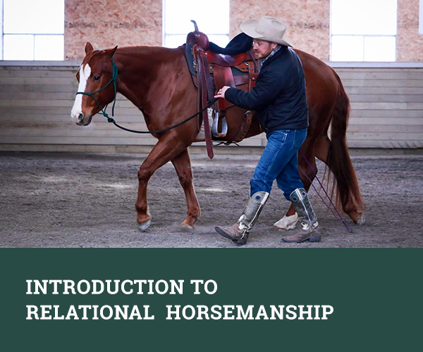 Introduction to Relational Horsemanship
