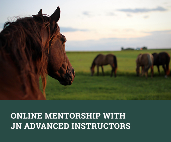 Online Mentorship with JN Advanced Instructor